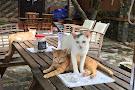 Jack's Cat Cafe