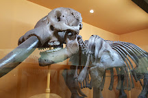 Yale Peabody Museum of Natural History, New Haven, United States