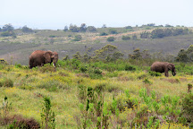 Nkonzo Wildlife Research, Hartenbos, South Africa
