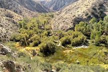 Big Morongo Canyon Preserve, Morongo Valley, United States