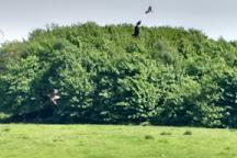 Argaty Red Kites, Doune, United Kingdom