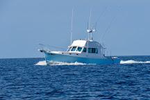 Jail Break Fishing Charters, Harwich Port, United States