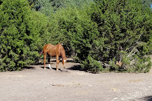 Stricker Trail Rides, Boerne, United States
