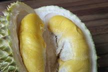 Jimmy's Durian Orchard, Karak, Malaysia