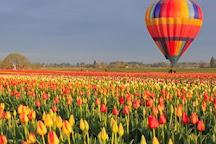 Kashmir Tulip Holidays, Srinagar, India