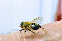 Honey Hole, West Jefferson, United States