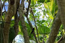 Barney's Flower & Hummingbird Garden Jamaica, Negril, Jamaica