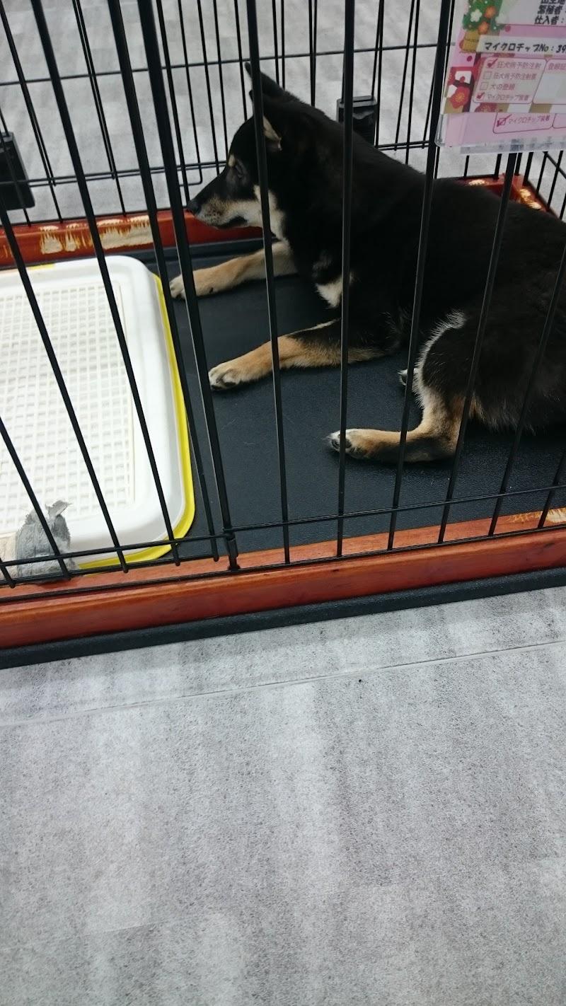 クーアンドリク 保護 犬