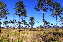 Forever Florida, Saint Cloud, United States
