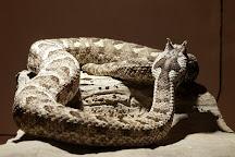 Snake Park, Swakopmund, Namibia