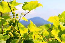 Ledge Rock Hill Winery, Corinth, United States