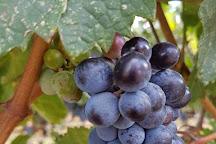Tinhorn Creek Vineyards, Oliver, Canada