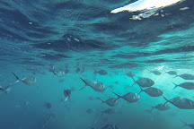 Planet Ocean Dive Center, San Cristobal, Ecuador
