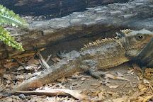 EcoWorld Aquarium and Wildlife Rehabilitation Centre, Picton, New Zealand