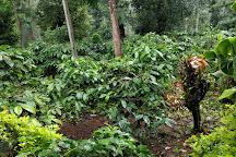 Mercara Gold Estate Coffee Plantation, Madikeri, India