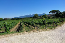Fattoria Sardi, Monte San Quirico, Italy
