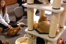 Cat Cafe Calico Shinjuku, Shinjuku, Japan