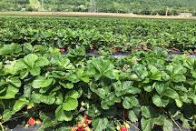 Donaldson Farms, Hackettstown, United States