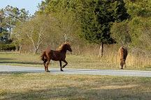 Greenbelt National Park, Greenbelt, United States