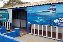 Oceanica Expeditions Peru, Organos, Peru