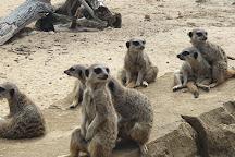 Go Ape, Woburn Sands, United Kingdom