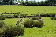 Parc Animalier de Sainte-Croix, Rhodes, France
