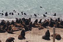 Reserva de Lobos Marinos, Mar del Plata, Argentina