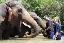Elephant sanctuary care Park, Chiang Mai, Thailand