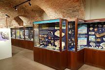 Museo Paleontologico Territoriale dell'Astigiano, Asti, Italy