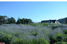 Tangleweed Farm