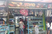 Yogyakarta Bird Market, Yogyakarta, Indonesia