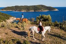Gregs Spetses Horses, Spetses, Greece