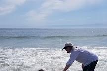New Smyrna Town Beach, New Smyrna Beach, United States