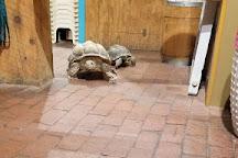 American International Rattlesnake Museum, Albuquerque, United States