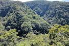 Children's Eternal Rain Forest