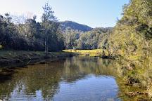 Bellinger River National Park, Dorrigo, Australia