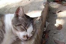 Save-A-Gato Cat Sanctuary, San Juan, Puerto Rico