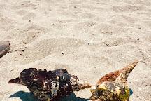 Blind Pass Beach Park, Sanibel Island, United States