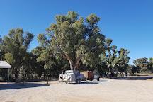 Giant Red Gum Tree, Orroroo, Australia