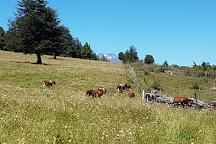 Santuario el Cani, Pucon, Chile