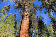 General Sherman Tree, Sequoia and Kings Canyon National Park, United States