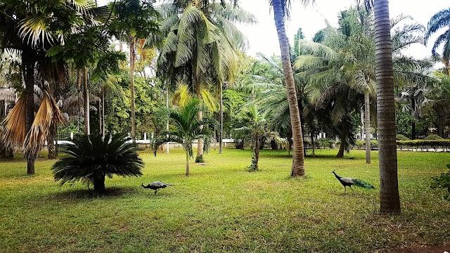 Palm Recreation Area