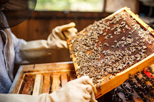 Bee Well Honey and Bee Supply, Pickens, United States