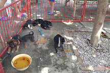 Lanta Animal Welfare, Ko Lanta, Thailand