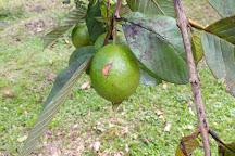 Plantation Grand Cafe, Capesterre-Belle-Eau, Guadeloupe