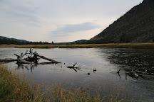 Lower Geyser Basin, Yellowstone National Park, United States