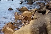 Riverwalk, Augusta, United States