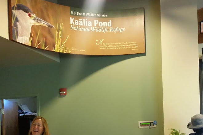 Kealia Pond National Wildlife Refuge, Kihei, United States