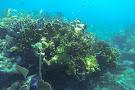 John Pennekamp Coral Reef State Park
