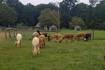 Highland Airs Alpaca Ranch, Hackettstown, United States